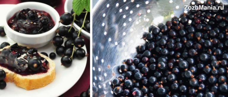 Варенье из черной смородины польза и вред