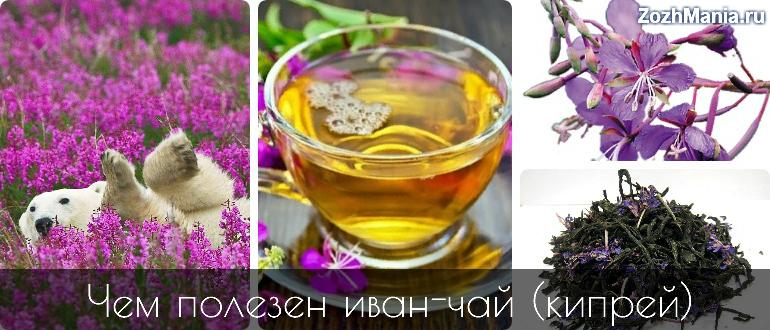 Полезные свойства и противопоказания иван чая для мужчин и женщин