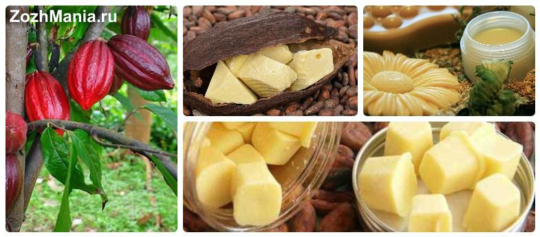 Какао-масло: полезные свойства и применение