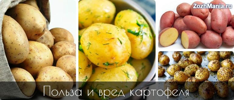 Вареная картошка польза и вред