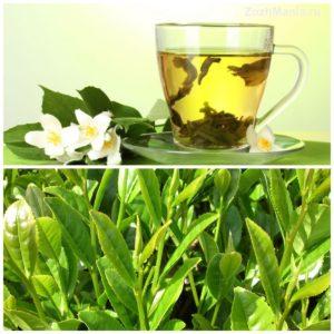 Зеленый чай польза для печени
