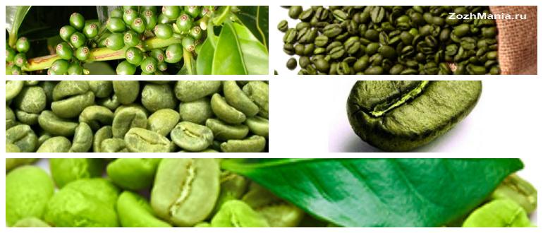 Зеленый кофе Полезные свойства и противопоказания