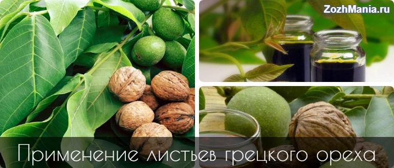 Чем полезны листья грецкого ореха и как их применять
