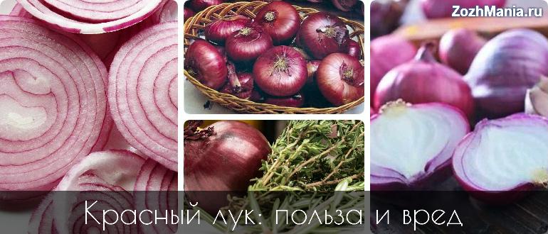 Красный лук: польза и вред для здоровья женщин и мужчин