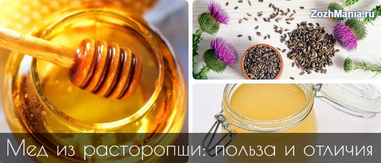 Расторопша, мед: полезные свойства и противопоказания
