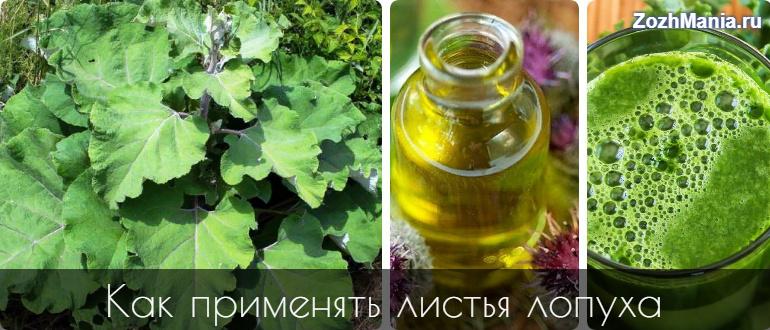 Лопух листья целебные свойства и правила применения