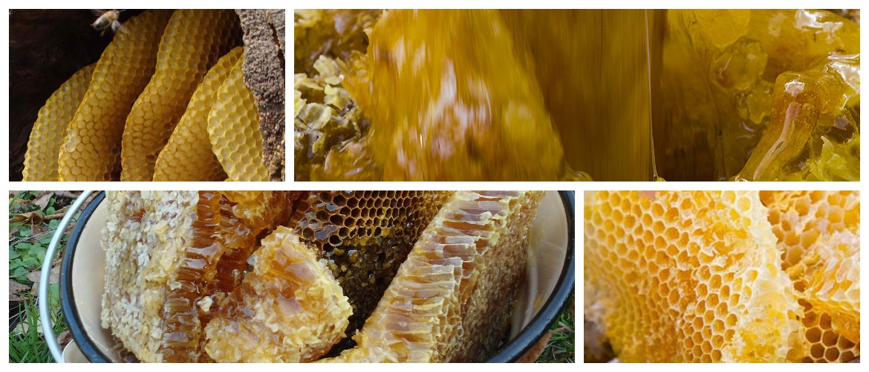 Бортевой мед: полезные свойства