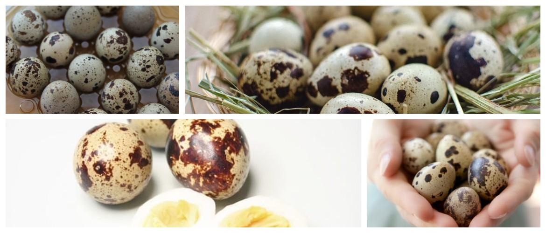 Можно ли при гипоаллергенной диете перепелиные яйца