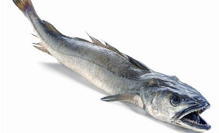 Свойства рыбы хек,