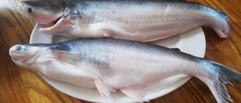 Рыба пангасиус