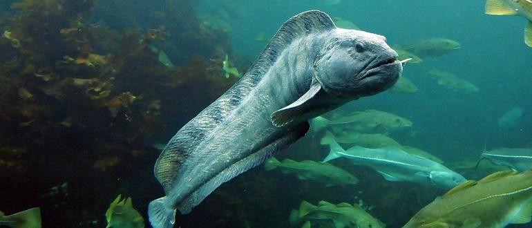 Какую рыбу нельзя есть беременным?