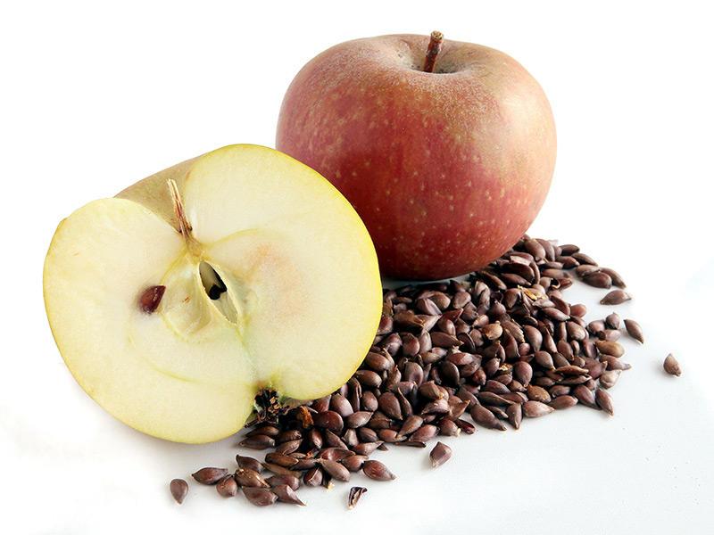 Яблочные семечки полезны или вредны?