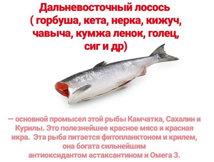Польза дальневосточного лосося