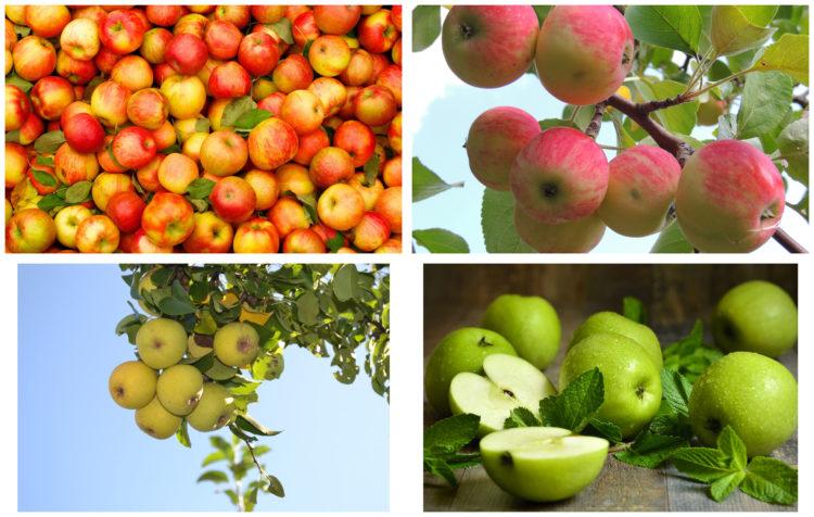 Полезные вещества яблочного сока
