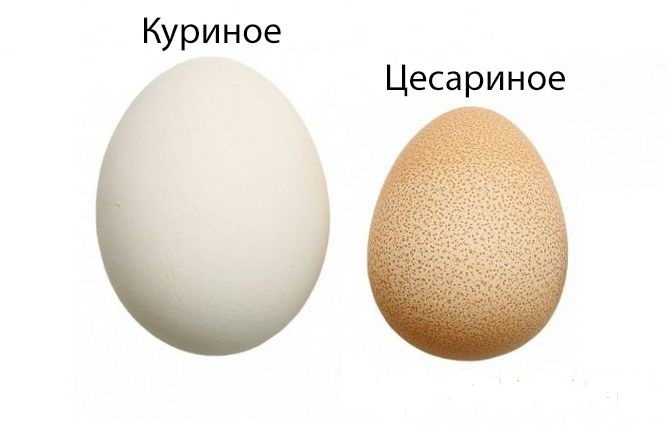 Сравнение двух яиц