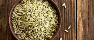 семена укропа полезные свойства и противопоказания